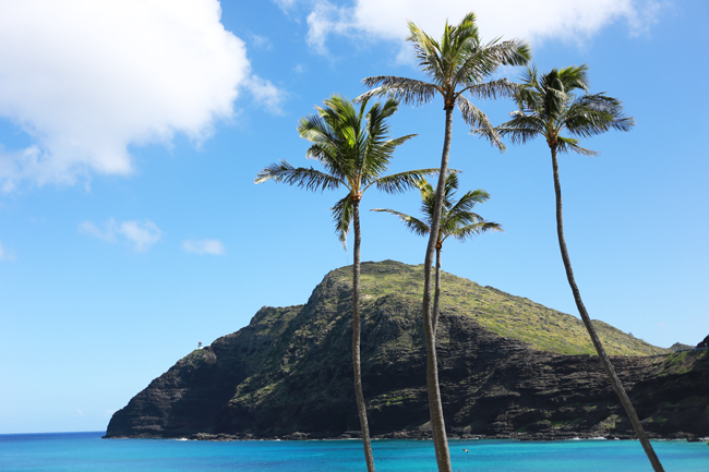 island-vibes-3.jpg