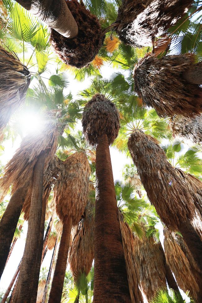 palm-springs-fling-1.jpg