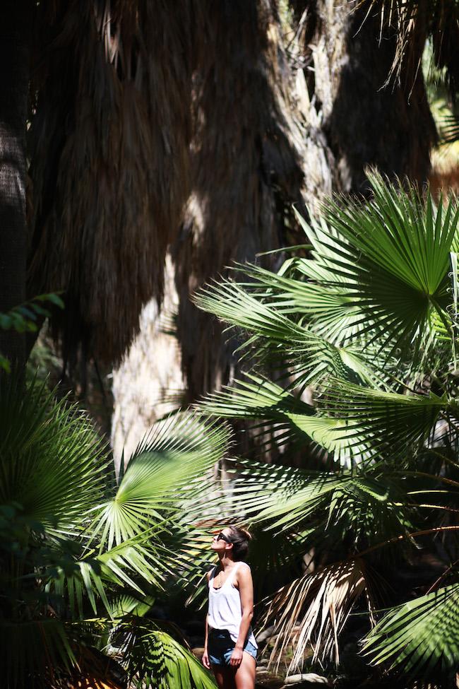 palm-springs-fling-2.jpg