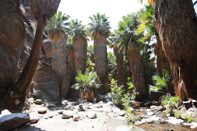 palm-springs-fling-4.jpg