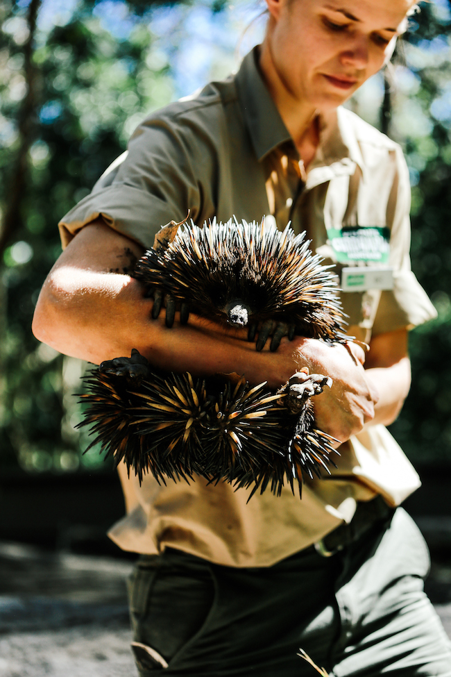 teva-australia-currumbinwildlifesanctuary-4.jpg