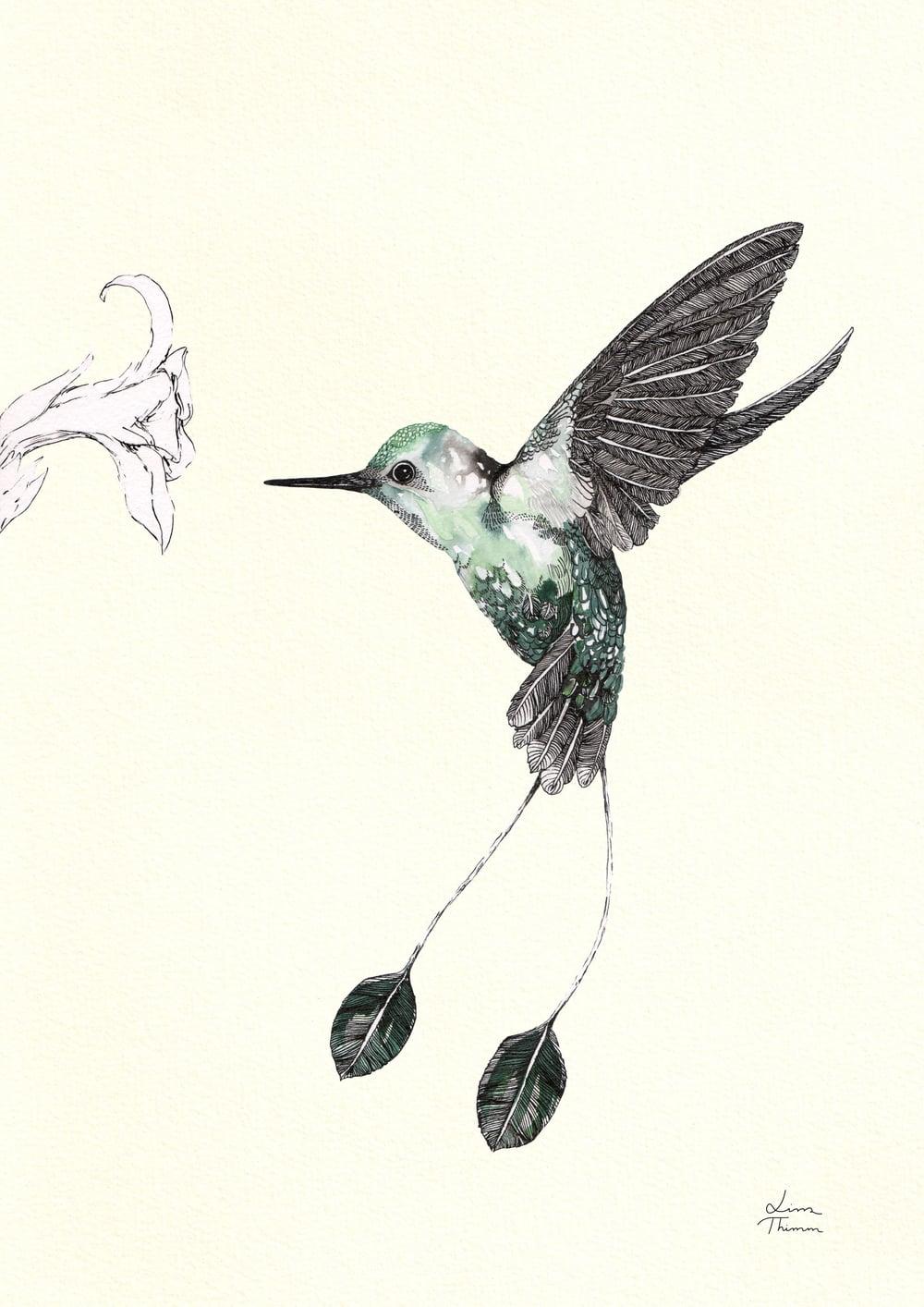 Lissa Thimm Hummingbird Racket Tail.jpg
