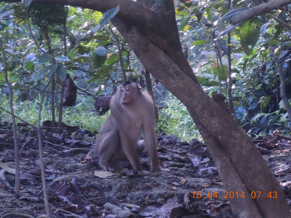 The macaque looks sad, but I honestly don't think there's a lot going on in his head.