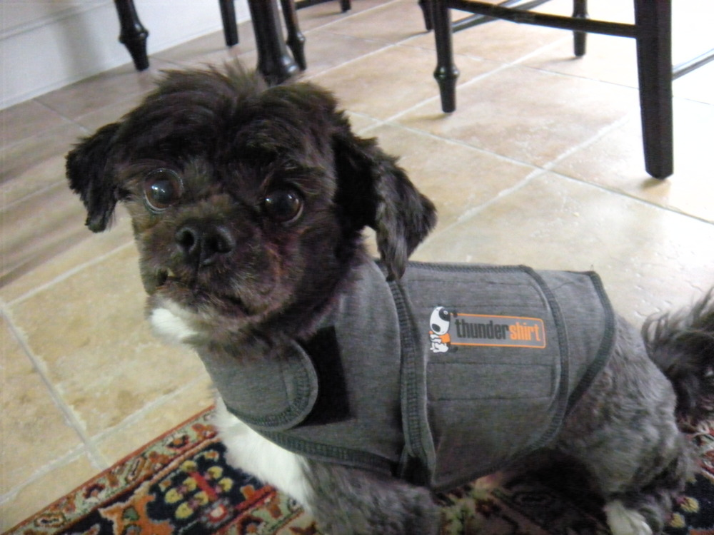 This has nothing to do with candles. It's Trip in his Thundershirt,which is what he wears when it's storming outside. Be brave, little Trip!