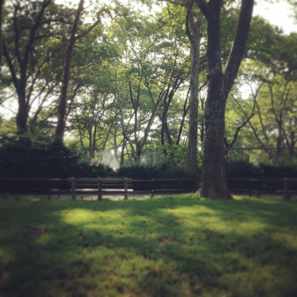 謝謝你們,親愛的樹靈,  以綠色的氣味包圍我  許多個美好的舞後。    獻給 McGolrick Park的樹靈們    2014.7.8.