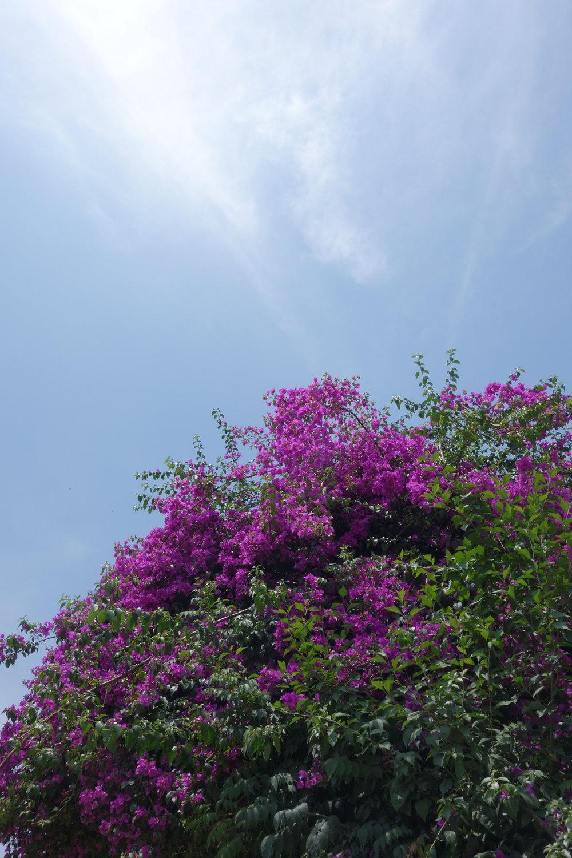 花擁抱艷陽藍天