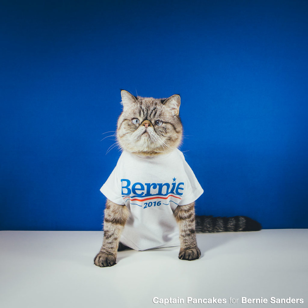 Captain Pancakes for Bernie Sanders by Gracie Hagen cats for bernie