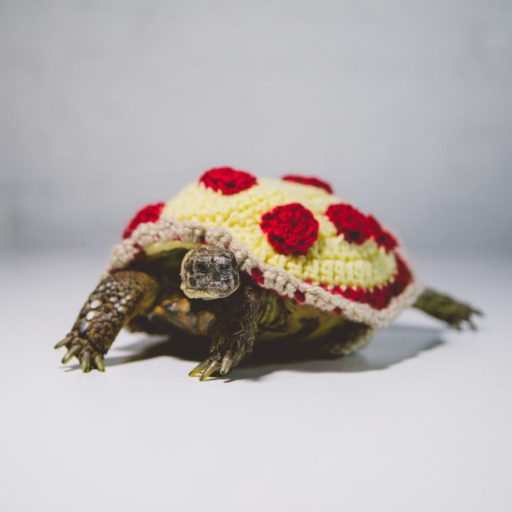 halloween 2018 russian tortoise pizza.jpg