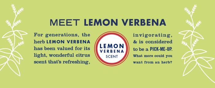 Meet Lemon Verbena