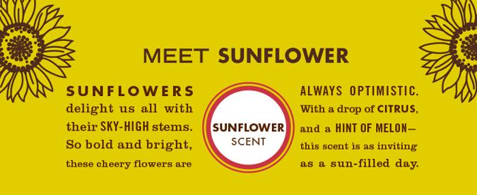 meet_sunflower2