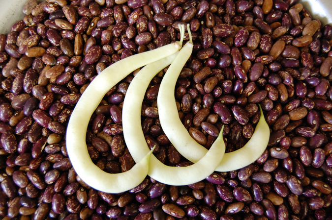 'Sultan's Crescent' beans, Green or Golden