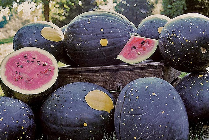 'Moon and Stars' watermelon