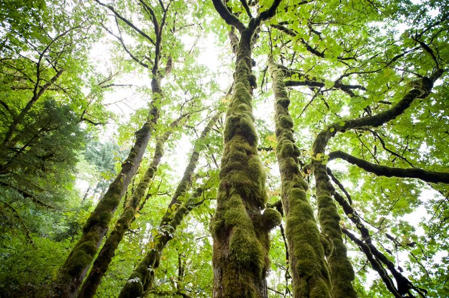 Travel_Writer_Photographer_Portland 14.jpg