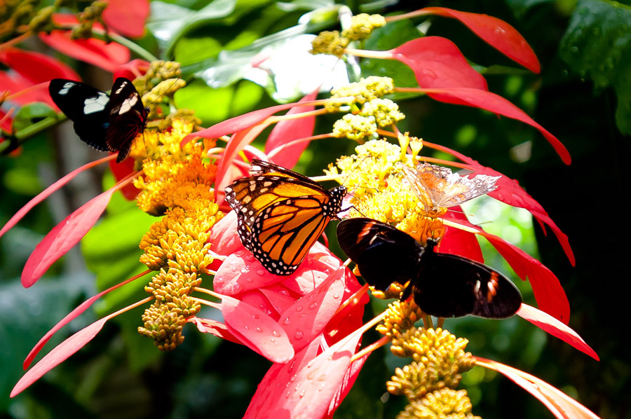 Austin_Travel_Writer_Photographer_butterflies010.jpg