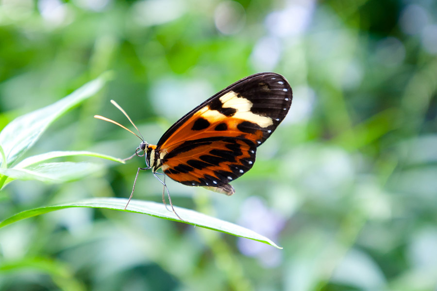 Austin_Travel_Writer_Photographer_butterflies012.jpg