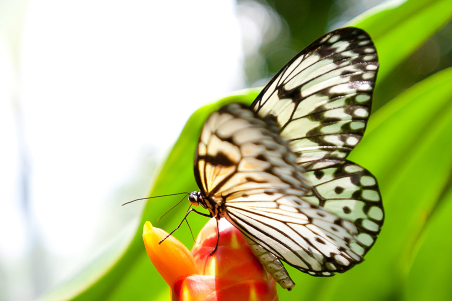 Austin_Travel_Writer_Photographer_butterflies014.jpg