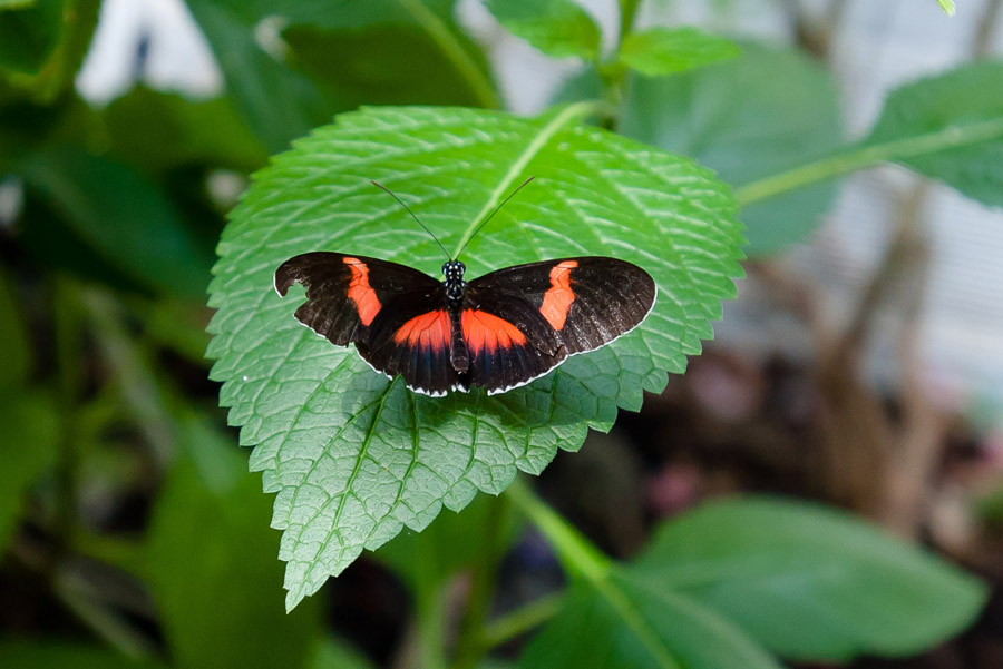 Austin_Travel_Writer_Photographer_butterflies020.jpg
