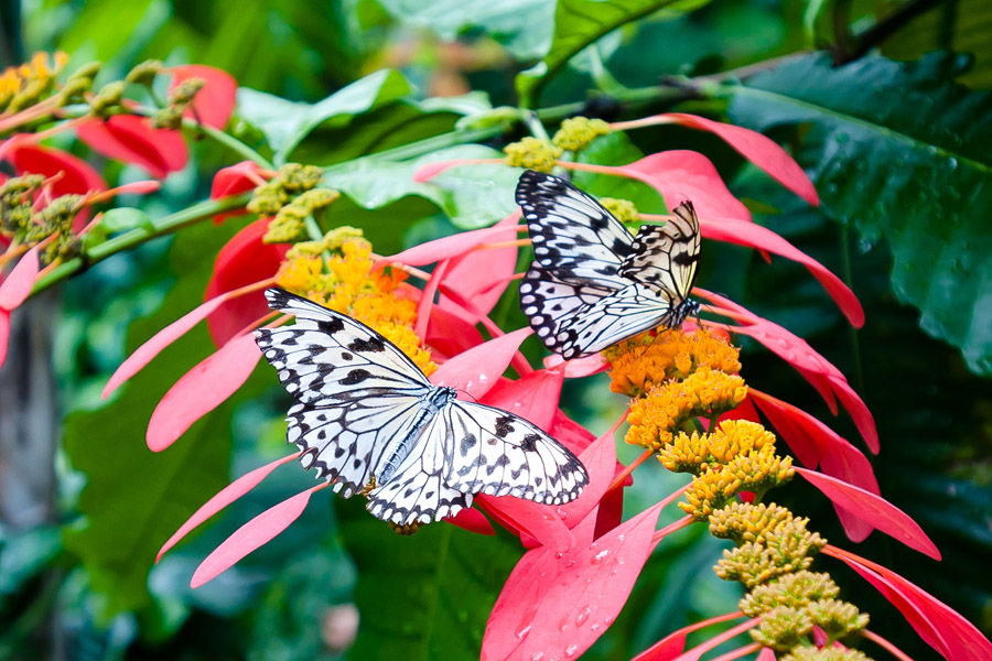 Austin_Travel_Writer_Photographer_butterflies019.jpg