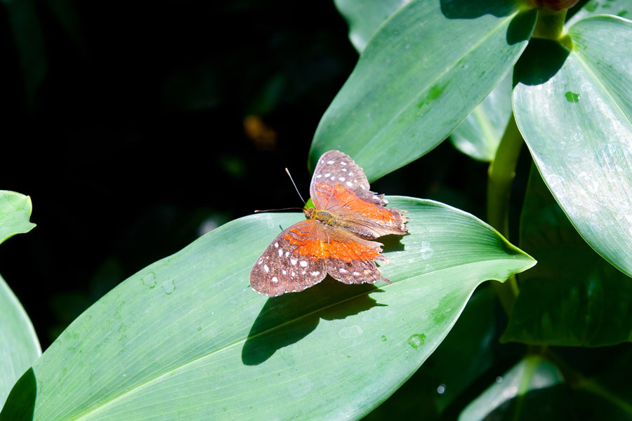 Austin_Travel_Writer_Photographer_butterflies022.jpg