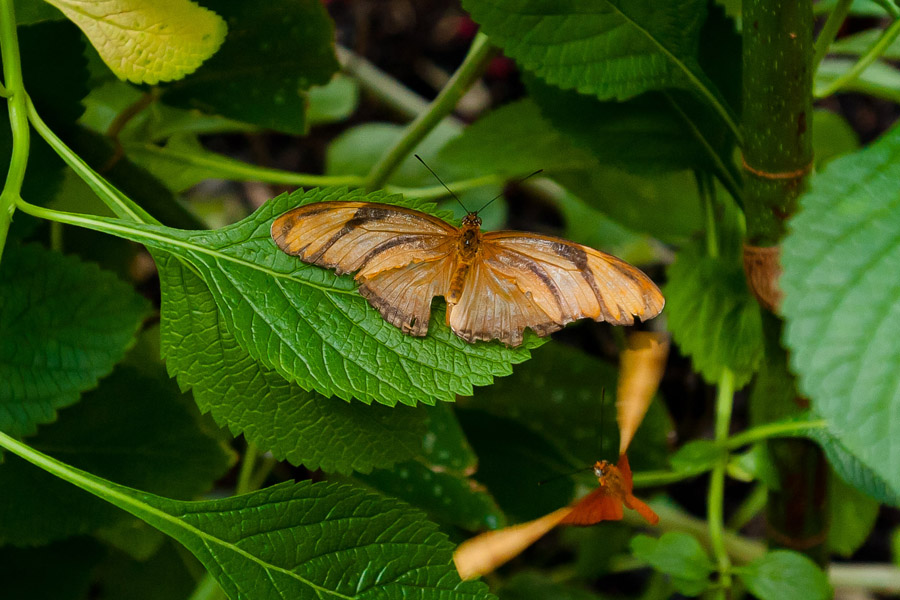 Austin_Travel_Writer_Photographer_butterflies021.jpg