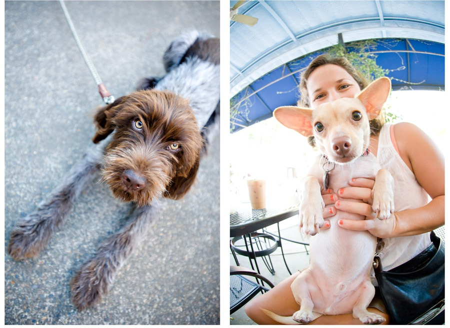 Austin_Travel_Writer_Photographer_Dogs006.jpg
