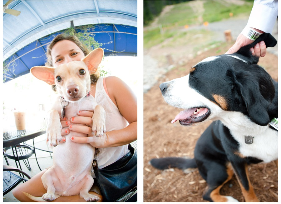 Austin_Travel_Writer_Photographer_Dogs011.jpg
