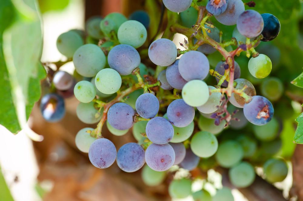 Spicewood Vineyards009.jpg