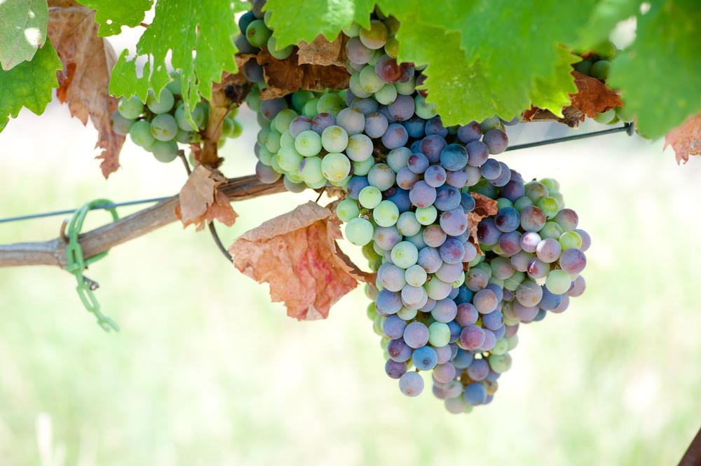 Spicewood Vineyards014.jpg