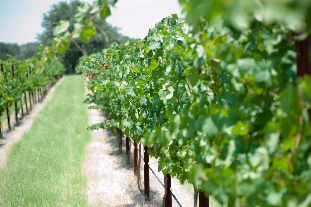 Spicewood Vineyards017.jpg