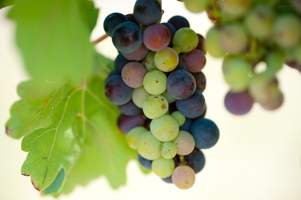 Spicewood Vineyards016.jpg