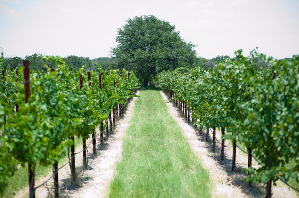 Spicewood Vineyards019.jpg