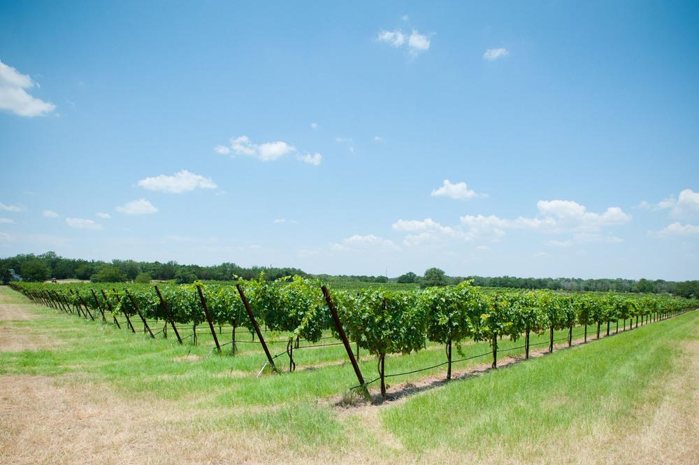 Spicewood Vineyards027.jpg