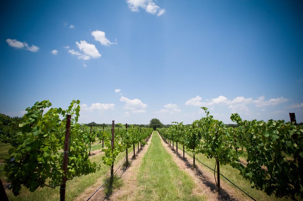 Spicewood Vineyards021.jpg