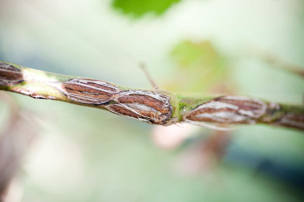 Bending Branch015.jpg