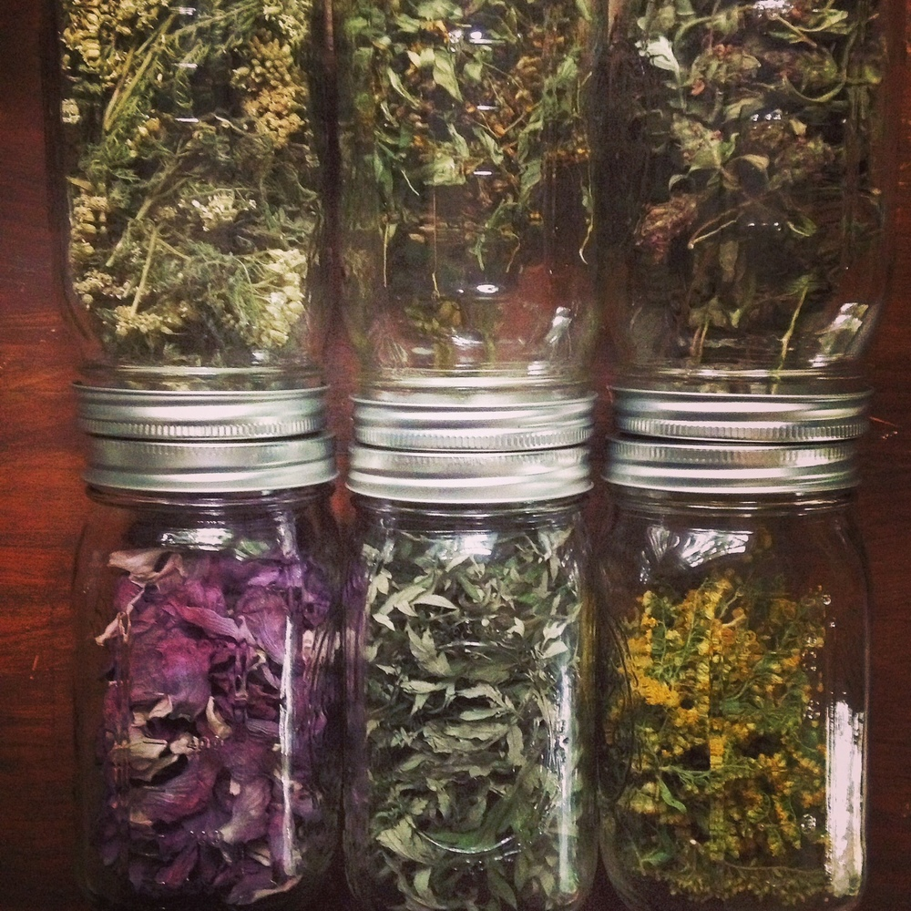 jars of herbs.JPG
