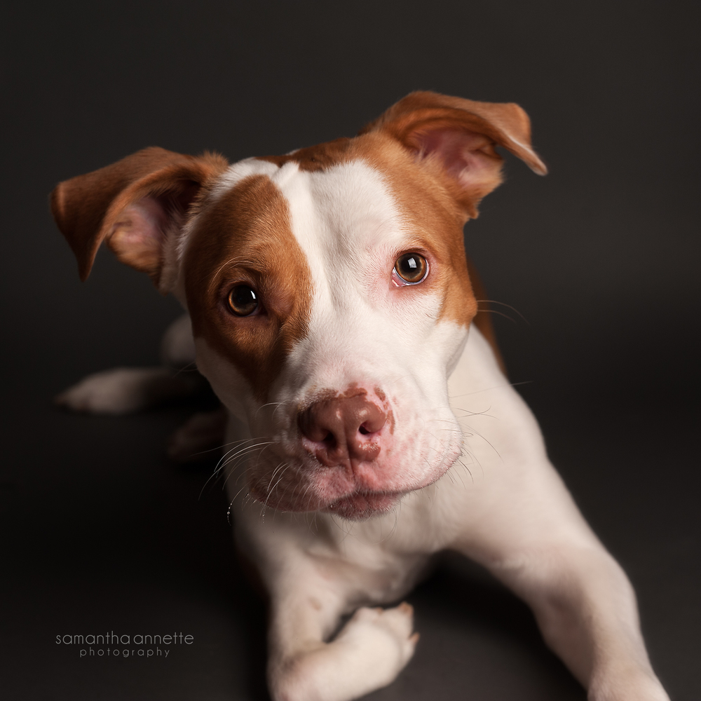 for the love of dogs u2014 samantha annette photography
