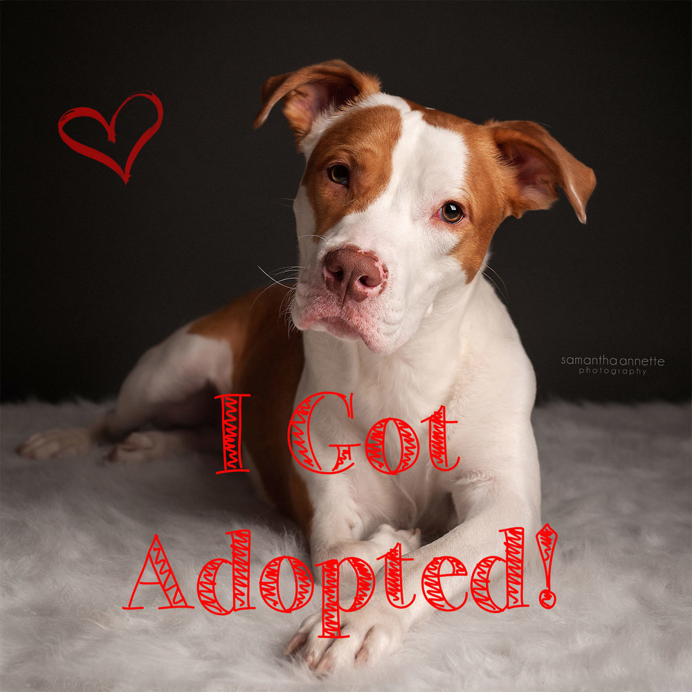 nemo adopted.jpg