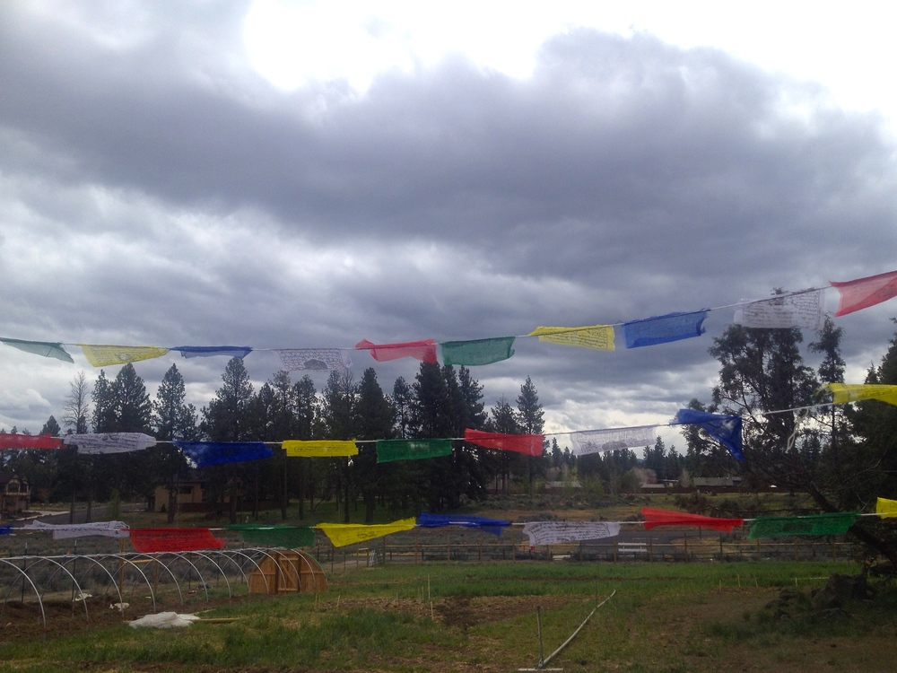 Buddhist flags flown over entrance into organic farm