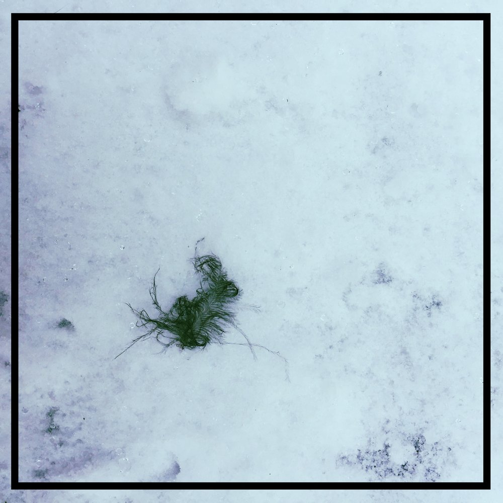 I found the feather falling with the snow. It landed at my feet.