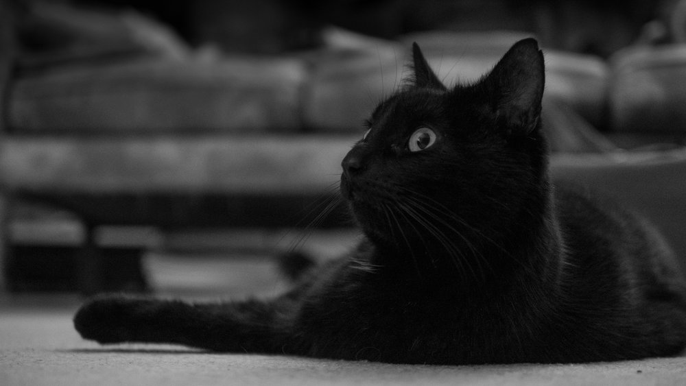 Shooting a black cat in a dark room is about as hard as it gets for autofocus but the G9 didn't miss a beat