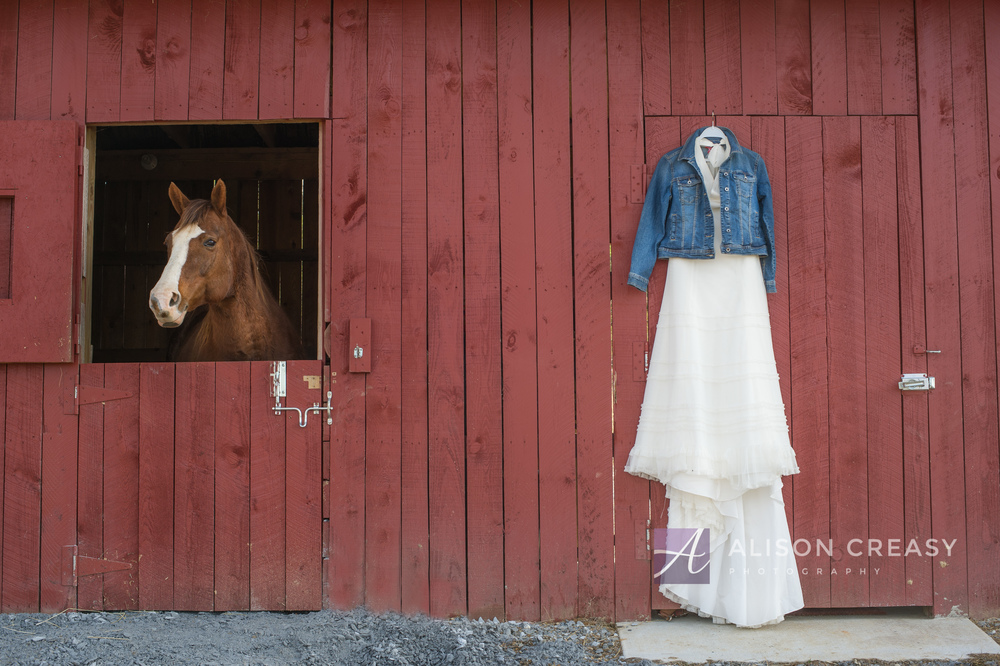 Wendy Horse Bridal-40-Edit.jpg