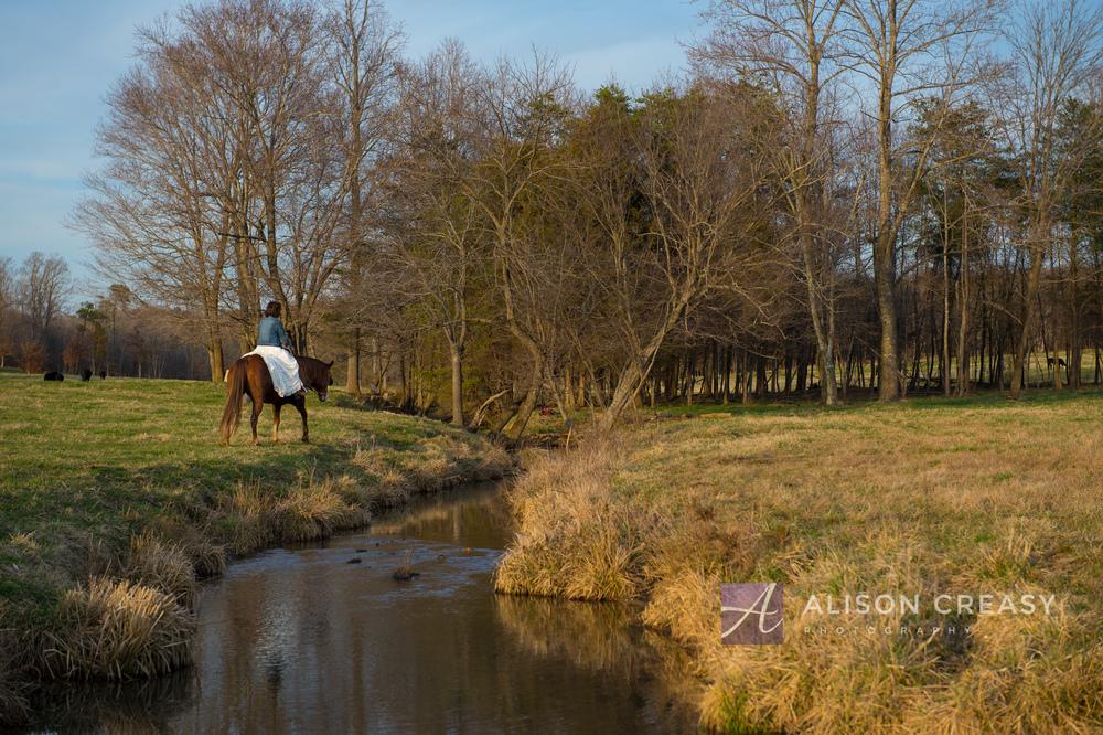 Wendy Horse Bridal-539.jpg