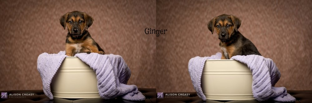 Alison-Creasy-Photography-Lynchburg-VA-Photographer_1035.jpg
