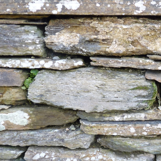 Drystone Wall, Caithness