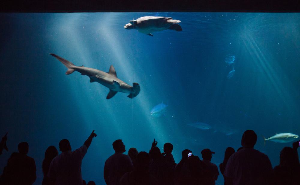 Deep sea tank at the Monterey Bay Aquarium.