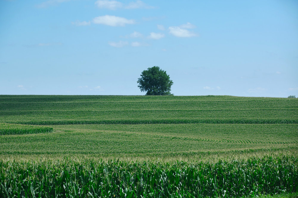 Farmland in southwest Iowa, photographed on July 27, 2017. Photo by Brad Zweerink.
