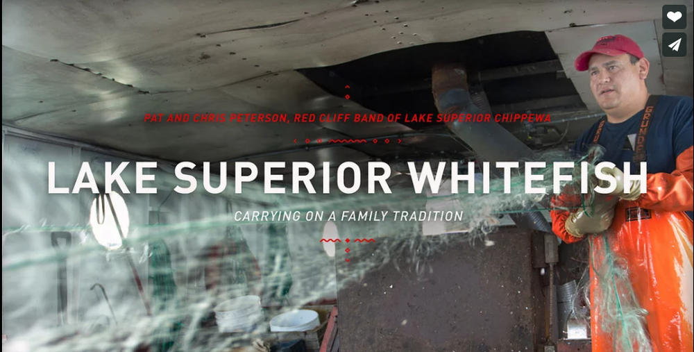 Lake Superior Whitefish  ~  Pat and Chris Peterson - Red Cliff Band of Lake Superior Chippewa