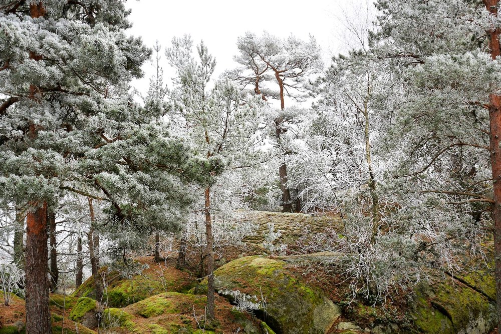 vinterkyst-1O2A4708.jpg