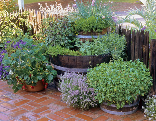 For A More Interesting Herb Garden  I Like To Add Flowers To My Containers.  This Year It Was Lavender And Viola Because They Looked Good When I Was At  The ...