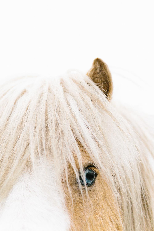 Marnie Hawson Photographer - wintery ponies